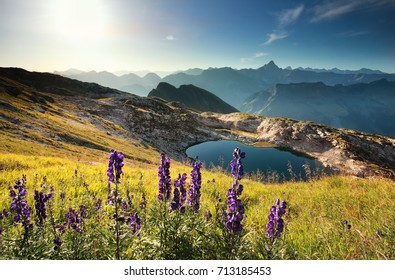 wildflowers on mountain near alpine lake, Allgau Alps, Germany