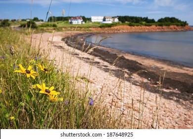 Wildflowers on Prince Edward Island coast near village of North Rustico in Green Gables Shore,  PEI, Canada.