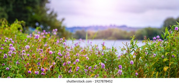 Wildflowers on the shore   river, summer view