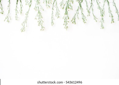 Wildflowers on white background. Flat lay, top view. Blog hero or header