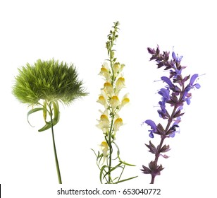 ?harming Wildflowers on a white background: green carnation Dianthus, Snapdragon and Mint flowers