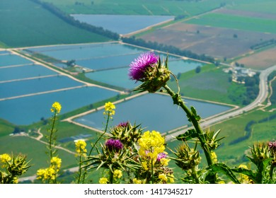 Wildflowers over Hula Valley, Golan Heights, Israel