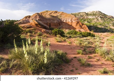 wildflowers in Palo Duro Canyon State Park in Texas.