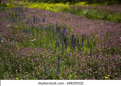 Wildflowers in Posof Highlands Ardahan Turkey