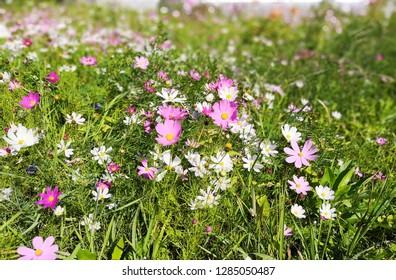 Wildflowers in sammer
