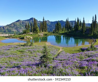 Wildflowers and a small alpine lake on the Pacific Crest Trail in Wenatchee National Forest along the eastern slopes of the Cascade Mountain Range in Washington state. Summer 2016.