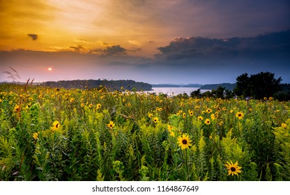 Wildflowers at sunset over the lake in Minnesota