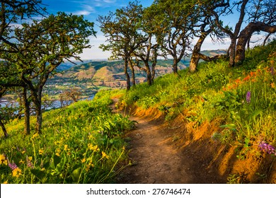 Wildflowers and trees along a trail, at Tom McCall Nature Preserve, Columbia River Gorge, Oregon.