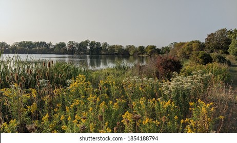 Wildflowers and trees on the edge of a marsh at Sterling State Park in Monroe Michigan