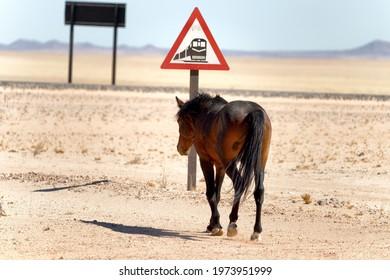 Wildhorse in desert crossing railway near town Aus in Namibia