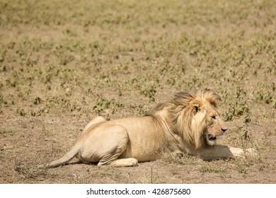 Wildlife in the african savanna