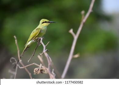 wildlife of bird