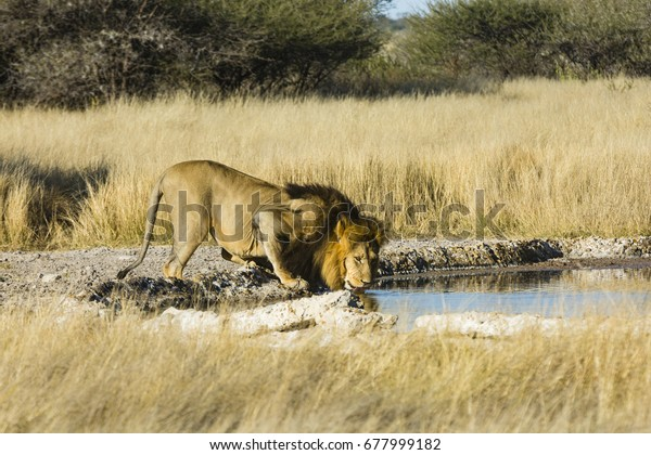 the wildlife of Central Kalahari Game Reserve