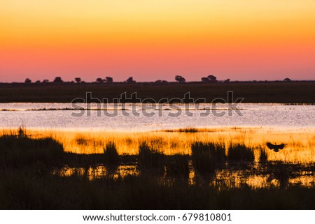 The wildlife of Chobe National Park
