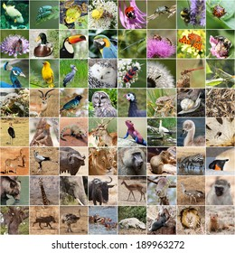 Tierwelt-Collage