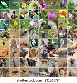 Wildlife collage with panda