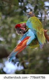 wildlife colorful parrot