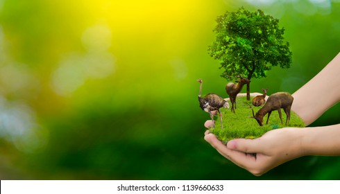 Wildlife conservation deer, ostrich, global warming, loneliness, ecology, human hands, can protect wildlife, trees in the hand, light yellow, sunlight.