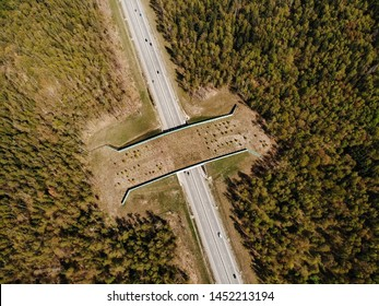 Wildlife crossing-a bridge over the highway in the forest. Kaluga region. Russia