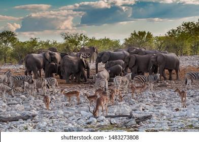 Wildlife crowds round a watering hole in Etosha National Park, Namibia