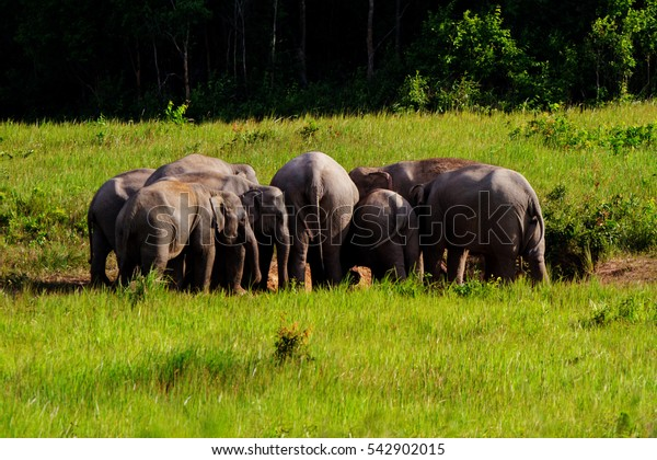 wildlife Elephant in Khoayai National park Nakornratsima city thailand