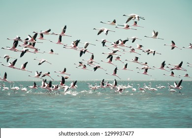 wildlife flying flamingos