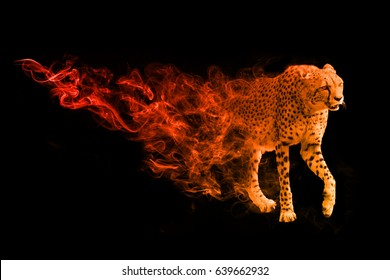 wildlife image of the world fasted land animal the cheetah, animal kingdom big cats of africa