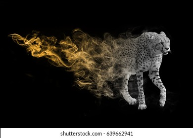 wildlife image of the world fasted land animal the cheetah, animal kingdom big 5 animals you must see