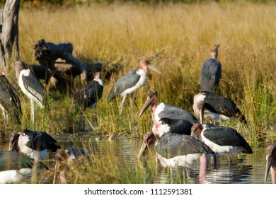 wildlife in the moremi game reserve in botswana