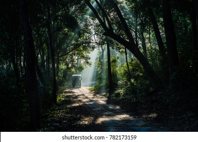 Wildlife and nature lover taking a safari at Jim Corbett National Park. Backlight sun rays appearing