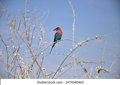 Wildlife near waterhole in Etosha national park