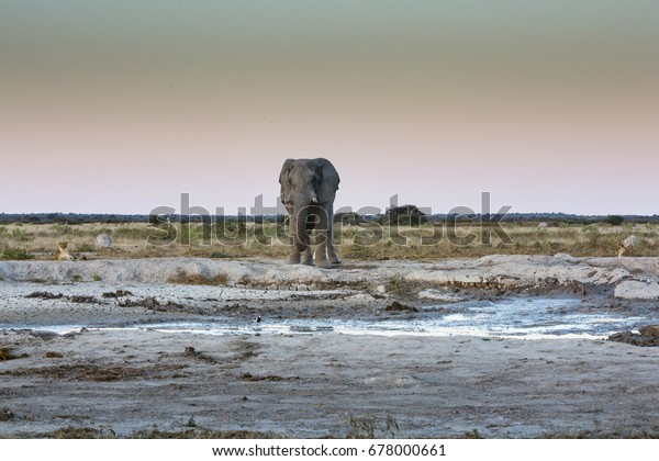 wildlife in Nxai Pan National Park