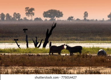 Wildlife on the Chobe River in Chobe National Park in Botswana