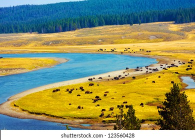 Wildlife Paradise in Yellowstone National Park,Wyoming