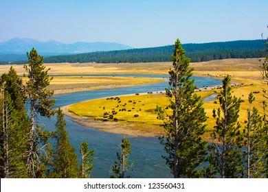 Wildlife Paradise in Yellowstone National Park,Wyoming
