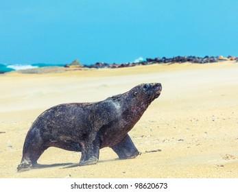 Wildlife photo of a New Zealand sea lion