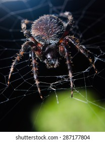 A wildlife photograph of a large brown spider resting in its web against a dark night sky.