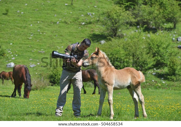 Wildlife photographer showing a picture on camera to a little foal in green mountain environment