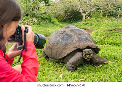 Wildlife photographer and tourist on Galapagos Islands photographing Giant Tortoise. Animals wildlife funny photo of tortoise in the highlands, Santa Cruz Island, Galapagos, Ecuador, South America