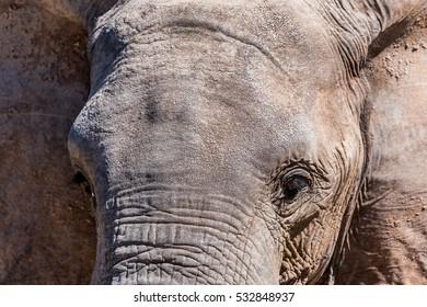 Wildlife Photographs in Ruaha Tanzania while on Safari in Africa, Tanzania