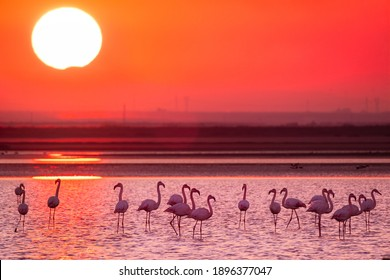 wildlife photography of pink flamingo under dramatic sunset in Puglia Italy