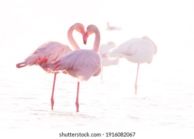 Wildlife Photography of pink flamingos hearth shaped - Italy