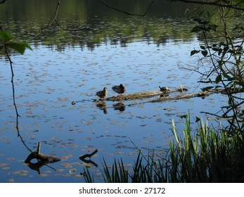 Wildlife relaxing and bathing in the sun on a floating log at Deer Lake park