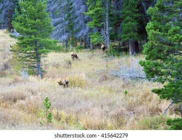 Wildlife roaming free in an open field in the Colorado Rocky Mountains