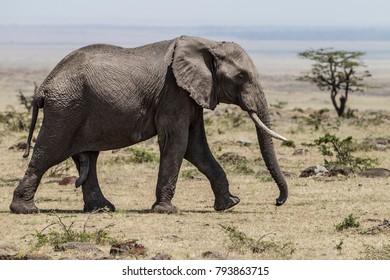 Wildlife shots - Uganda