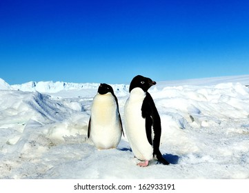Wildlife of South Pole.