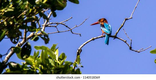 Wildlife of Sundarban