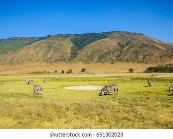 Wildlife, Tanzania