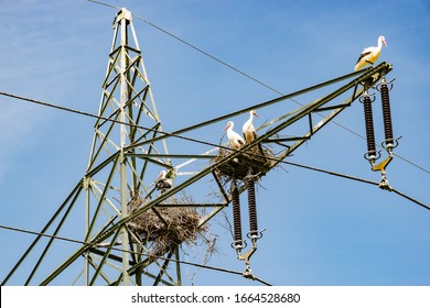 Wildlife. Technology, Germany - Stork couples have built their nests on the mast of a 220 KV high-voltage line, in the bird sanctuary Amöneburger Becken.