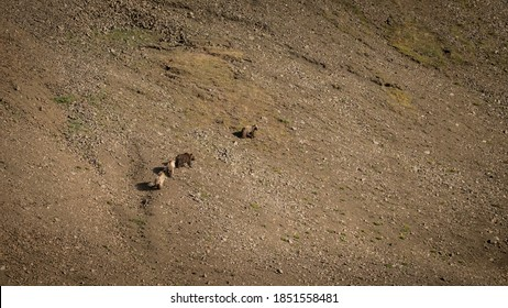 Wildlife viewing: Grizzly mom with three blond cubs - watched from a safe distance.